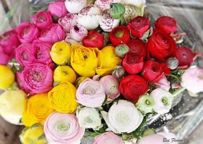 bea-fleurs-renoncule-nice