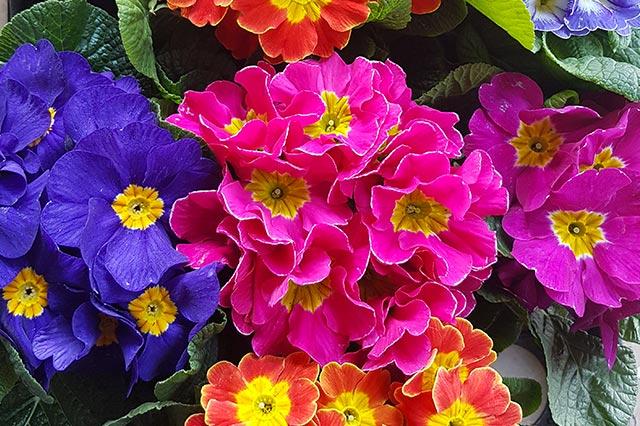 Fleurs-Colorees-fleuriste-nice