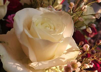 rose-blanche-nice-fleuriste-beafleurs