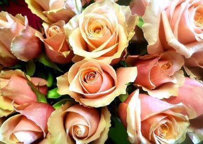 rose-roses-fleurs