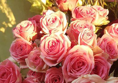 roses-rose-soleil-fleuriste