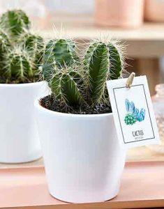 plante d polluante le top des plantes avoir b a fleurs. Black Bedroom Furniture Sets. Home Design Ideas