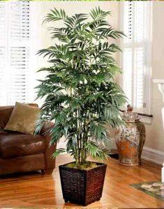 palmier-bambou-plante-depolluante