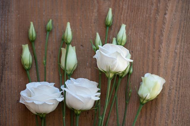 Lisianthus, une magnifique fleur d'été chez votre Fleuriste