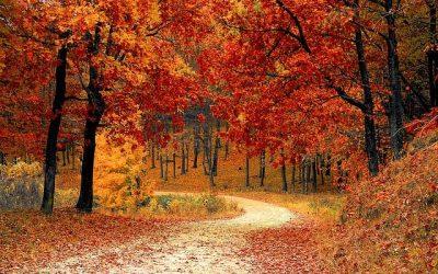 Fleurs d'automne : Le top 6 de la saison
