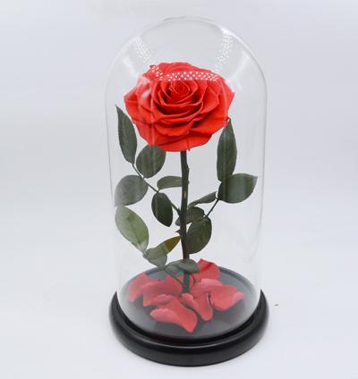 rose eternelle saint valentin