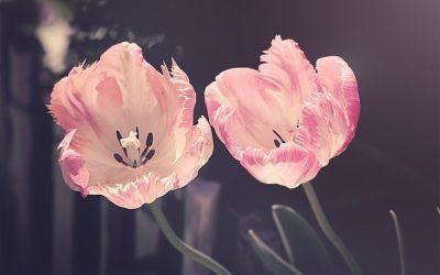 Quelles fleurs offrir à sa grand-mère?