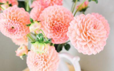 Quelles fleurs offrir à un anniversaire pour faire plaisir à la personne ?